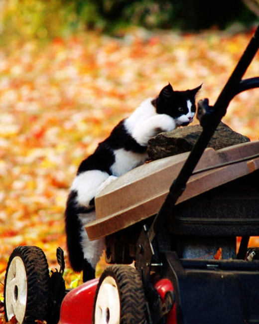 adorable_felines_having_a_blast_in_the_fall_leaves_640_06.jpg