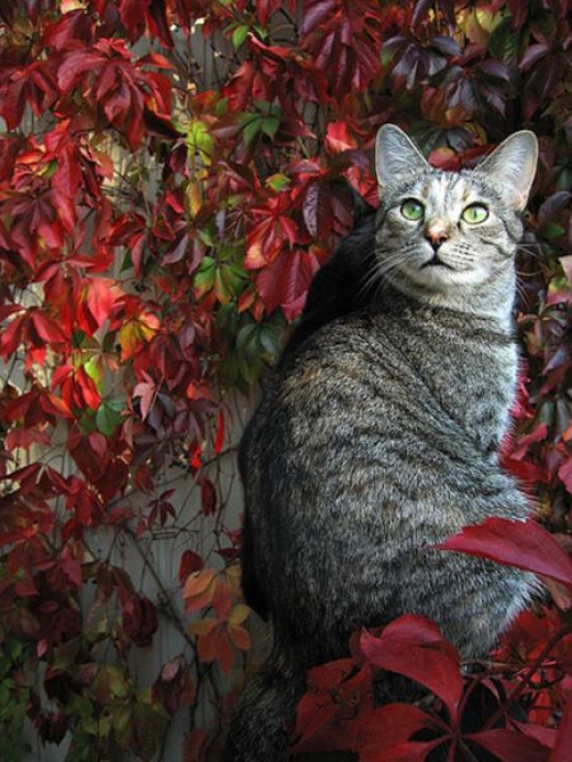 adorable_felines_having_a_blast_in_the_fall_leaves_640_19.jpg