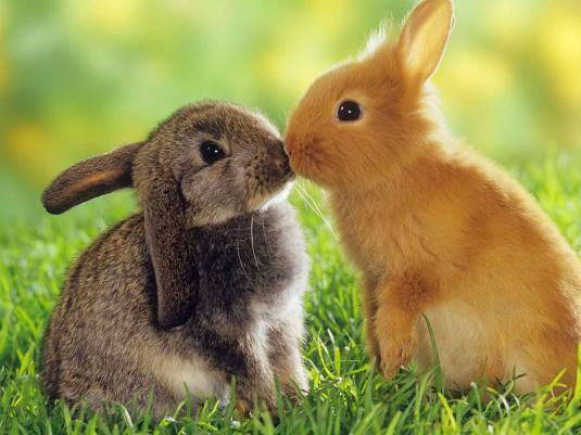two-rabbits-in-love.jpeg