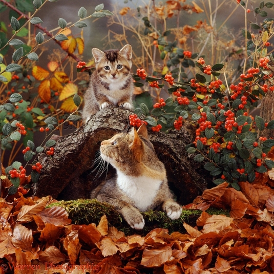12528-cat-and-kitten-in-autumn-scene.jpg