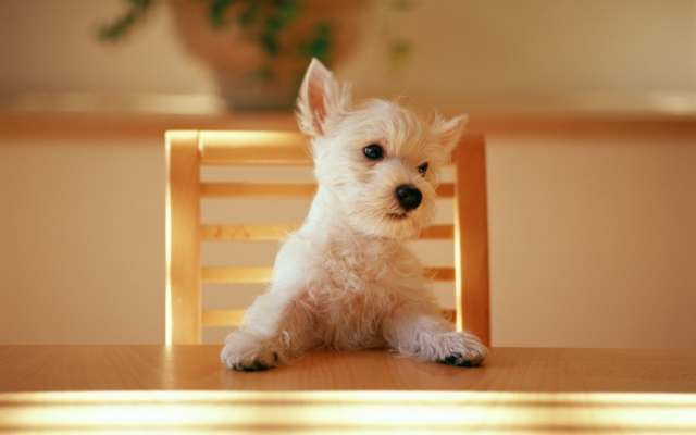 dog-at-the-table-wallpapers_8862_1680x1050.jpg
