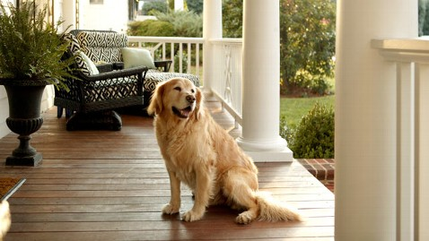 gty_dog_on_porch_thg_120409_wblog.jpg
