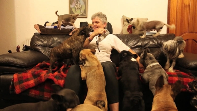 life-with-41-dogs3.jpg
