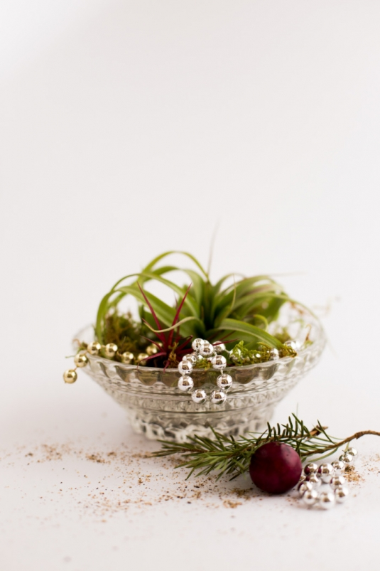 airplants-holidays-3.jpg