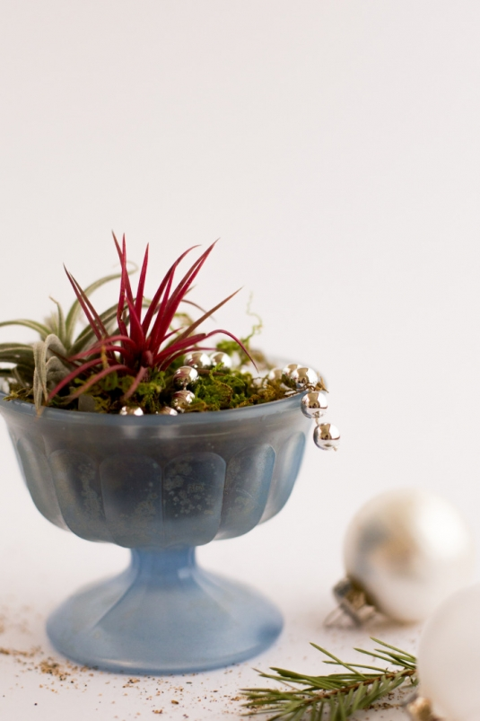 airplants-holidays-8.jpg