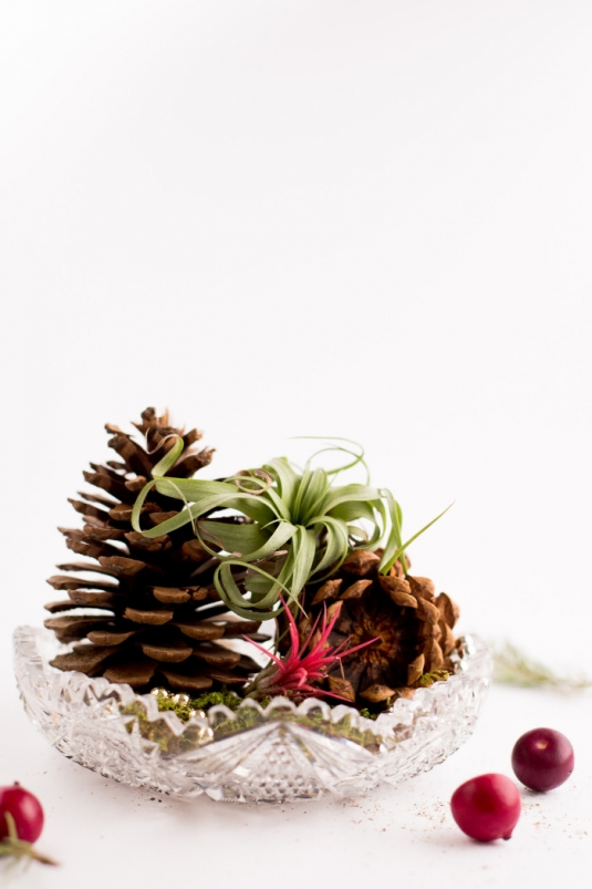 airplants-holidays-9.jpg