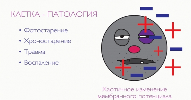 bad-cell-microcurrents-kosmetologa-net.jpg