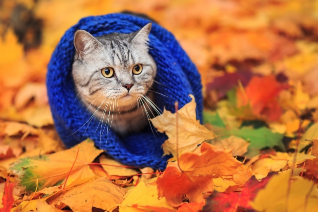 cats_autumn_foliage_439442.jpg