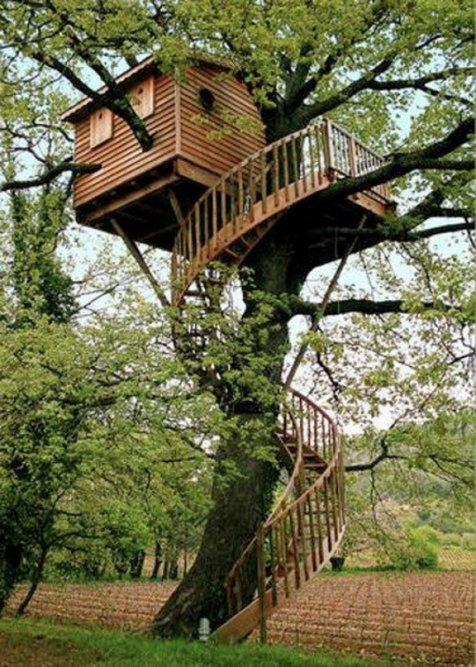 unusual-but-interesting-tree-houses-5.jpg
