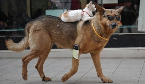 cat_backpack_for_dogs_on_the_go-322646.jpg