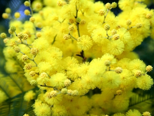 nature___flowers_yellow_flowers_in_the_spring_042392_29.jpg