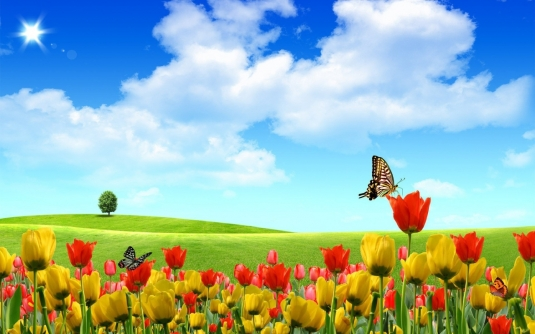photoshop___abstract_butterfly-tulips_050618_12.jpg