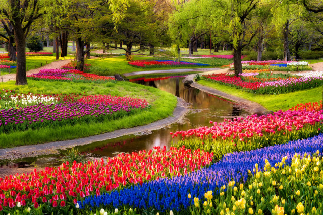 tulips30.png