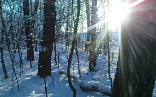 winter_sunny_day_in_the_forest_066708_12.jpg
