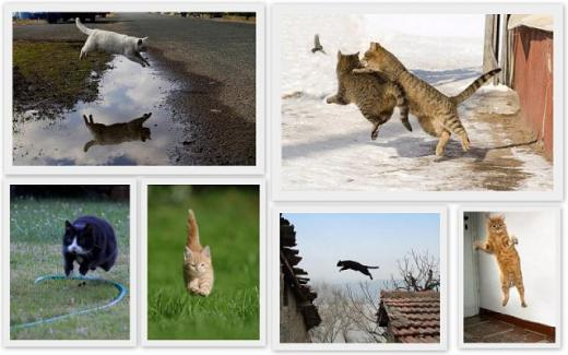 cats_can_fly_640_02.jpg