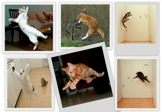 cats_can_fly_640_03.jpg