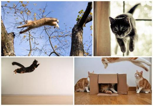 cats_can_fly_640_04.jpg