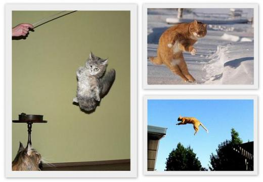 cats_can_fly_640_06.jpg