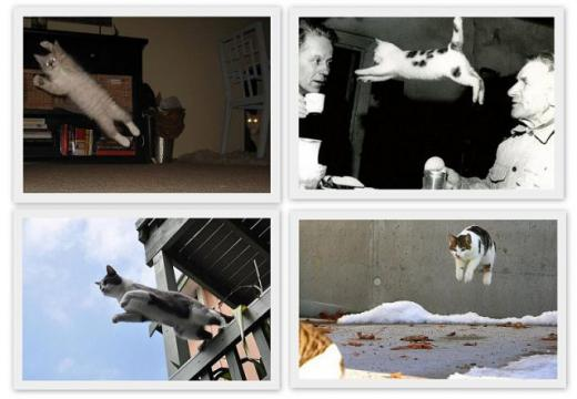 cats_can_fly_640_07.jpg