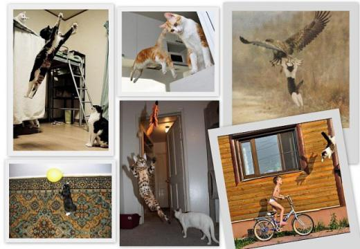 cats_can_fly_640_08.jpg