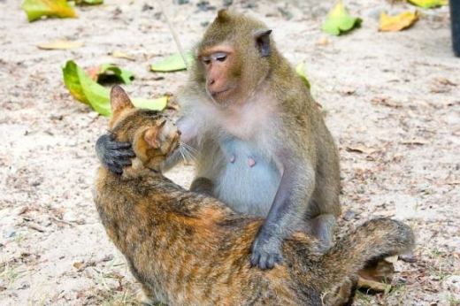 adorable_cat_loving_monkey_640_01.jpg