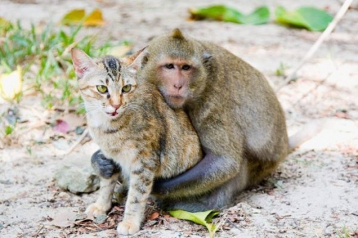 adorable_cat_loving_monkey_640_02.jpg