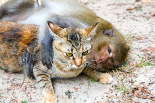 adorable_cat_loving_monkey_640_04.jpg