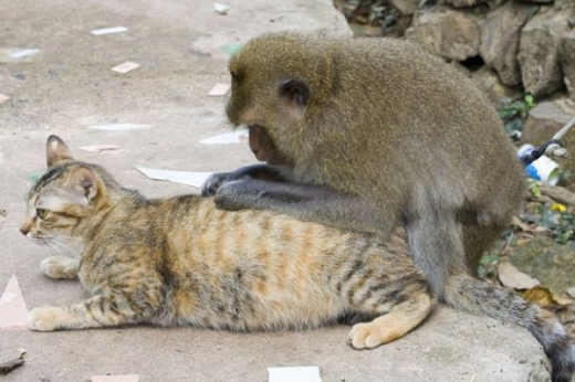 adorable_cat_loving_monkey_640_05.jpg