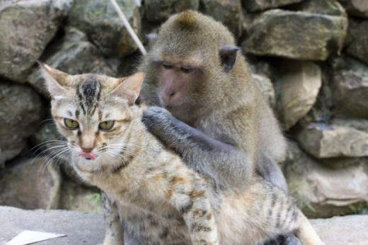 adorable_cat_loving_monkey_640_06.jpg