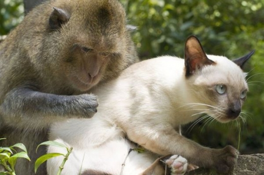 adorable_cat_loving_monkey_640_07.jpg