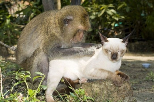 adorable_cat_loving_monkey_640_08.jpg