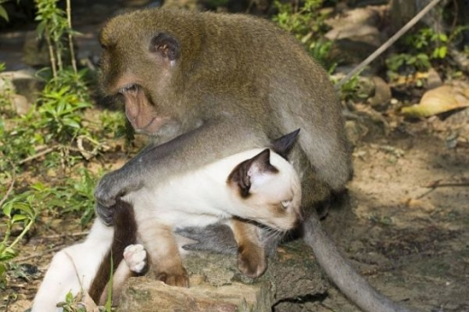 adorable_cat_loving_monkey_640_10.jpg
