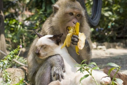 adorable_cat_loving_monkey_640_11.jpg