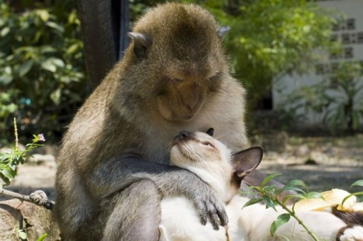 adorable_cat_loving_monkey_640_12.jpg