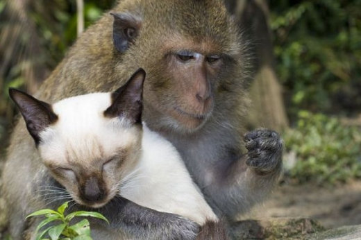 adorable_cat_loving_monkey_640_13.jpg
