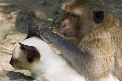 adorable_cat_loving_monkey_640_14.jpg