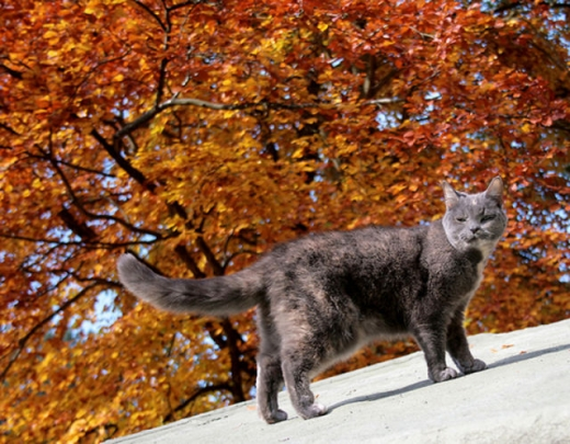 adorable_felines_having_a_blast_in_the_fall_leaves_640_01.jpg