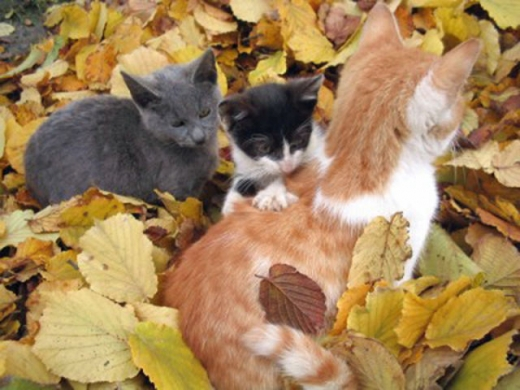 adorable_felines_having_a_blast_in_the_fall_leaves_640_02.jpg