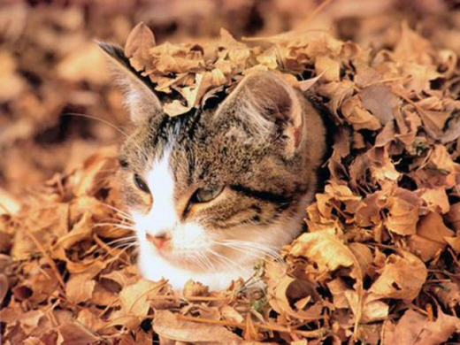 adorable_felines_having_a_blast_in_the_fall_leaves_640_04.jpg