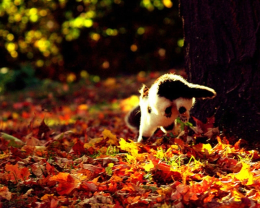adorable_felines_having_a_blast_in_the_fall_leaves_640_15.jpg