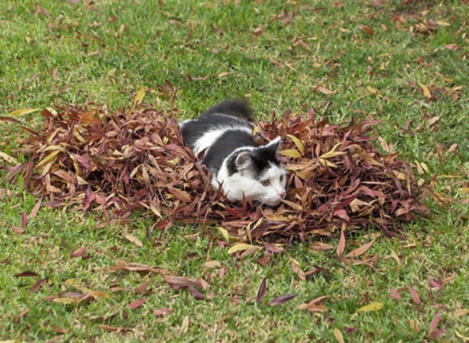 adorable_felines_having_a_blast_in_the_fall_leaves_640_16.jpg