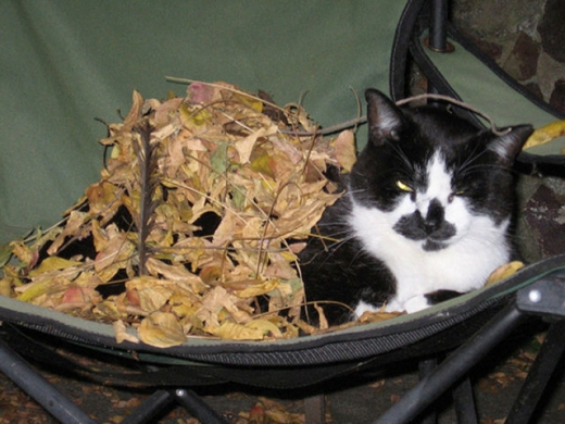 adorable_felines_having_a_blast_in_the_fall_leaves_640_18.jpg