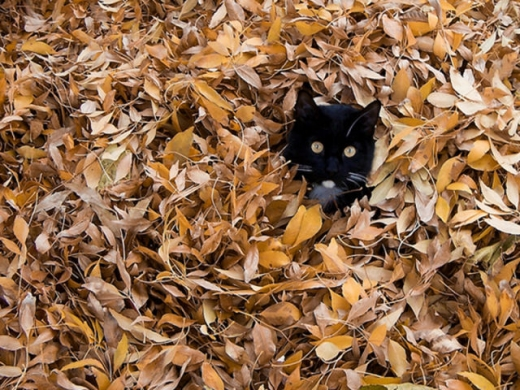 adorable_felines_having_a_blast_in_the_fall_leaves_640_20.jpg