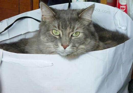 adorable_kitty_cats_in_bags_640_01.jpg