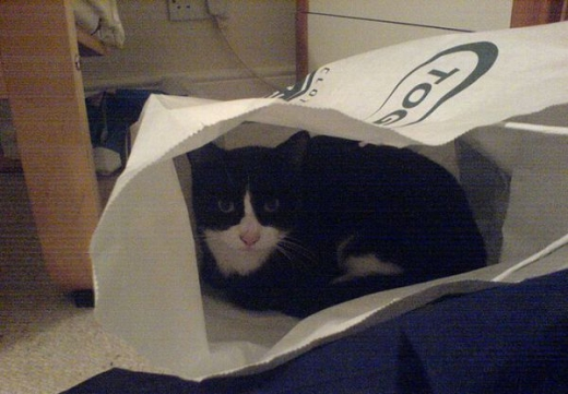 adorable_kitty_cats_in_bags_640_02.jpg