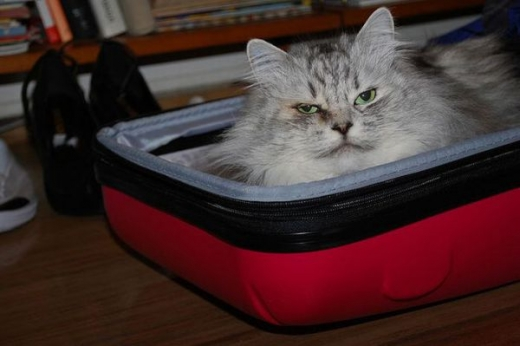 adorable_kitty_cats_in_bags_640_03.jpg