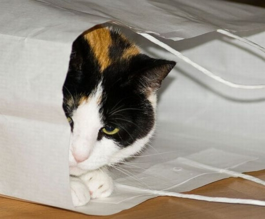 adorable_kitty_cats_in_bags_640_04.jpg