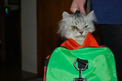 adorable_kitty_cats_in_bags_640_05.jpg