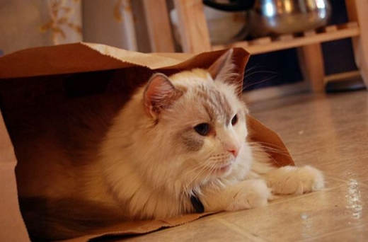 adorable_kitty_cats_in_bags_640_06.jpg