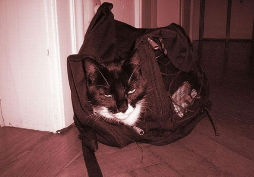 adorable_kitty_cats_in_bags_640_08.jpg